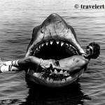 Где могут напасть акулы