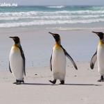 Фолклендские-острова-Антарктики-рассказ-туриста